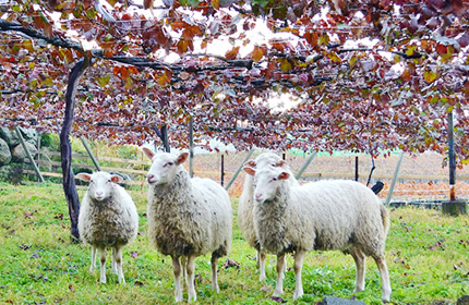 まるき葡萄酒 羊